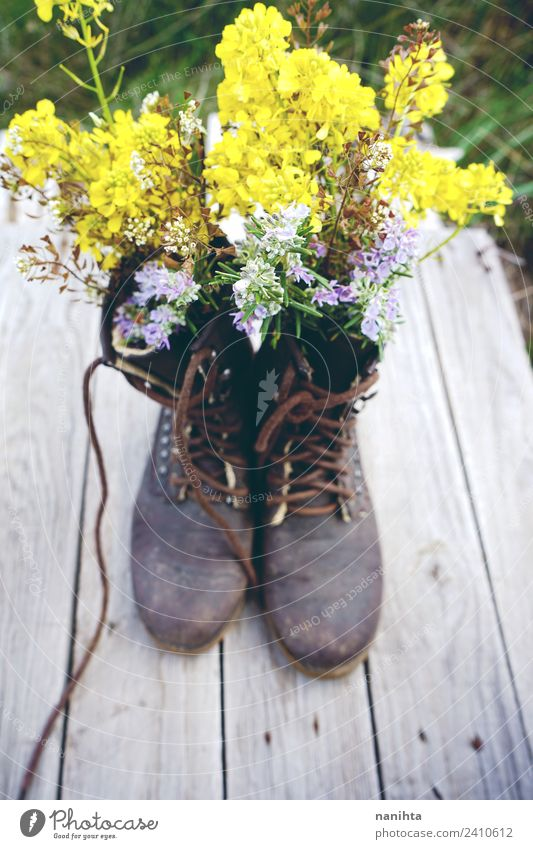 Old and dirty boots filled with flowers Nature Plant Beautiful Flower Yellow Environment Spring Natural Wood Design Retro Growth Esthetic Fresh Creativity