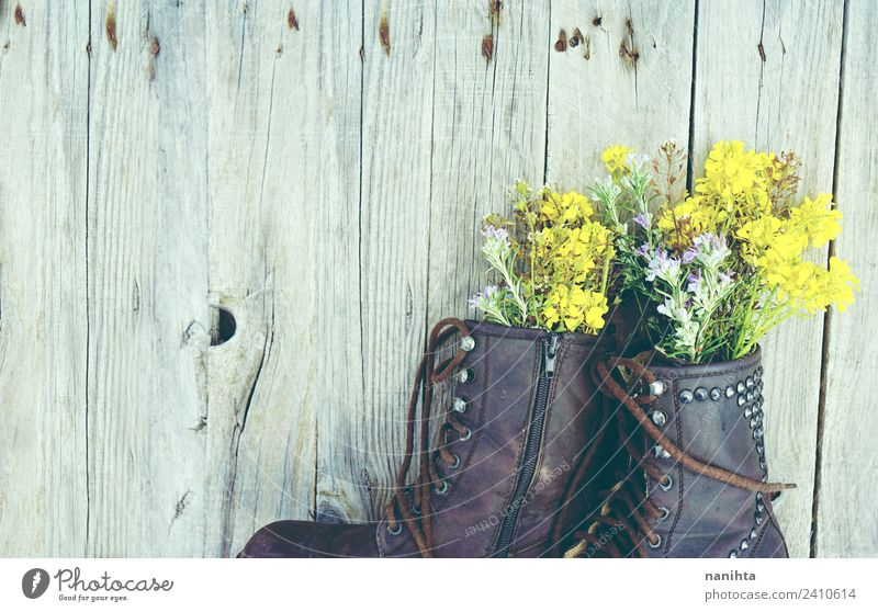 Old boots filled with flowers against wood background Nature Plant Flower Wild plant Pot plant Fashion Clothing Boots Wood Leather Esthetic Authentic Simple