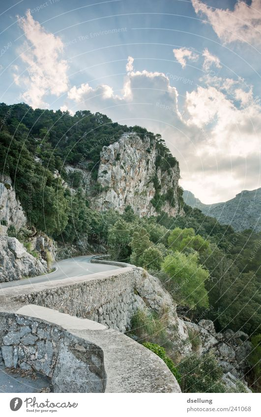 Mallorca X Nature Landscape Plant Sky Clouds Beautiful weather Tree Bushes Forest Rock Wall (barrier) Wall (building) Juicy Gray Green Street Majorca Stone