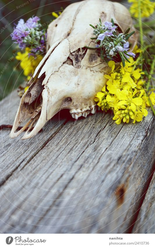 Close up of an animal skull filled with flowers Design Exotic Nature Plant Flower Wild plant Animal Wild animal Dead animal Deer 1 Animal skull Bone Wood Old