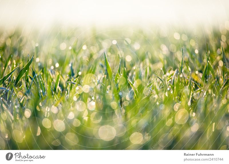 glittering morning dew on a meadow Environment Nature Landscape Plant Drops of water Spring Summer Grass Meadow Field Fresh Healthy Wet Green