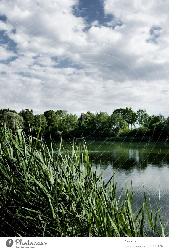 Day at the lake Lifestyle Nature Landscape Sky Clouds Storm clouds Summer Plant Common Reed Lakeside Esthetic Dark Blue Green Loneliness Relaxation