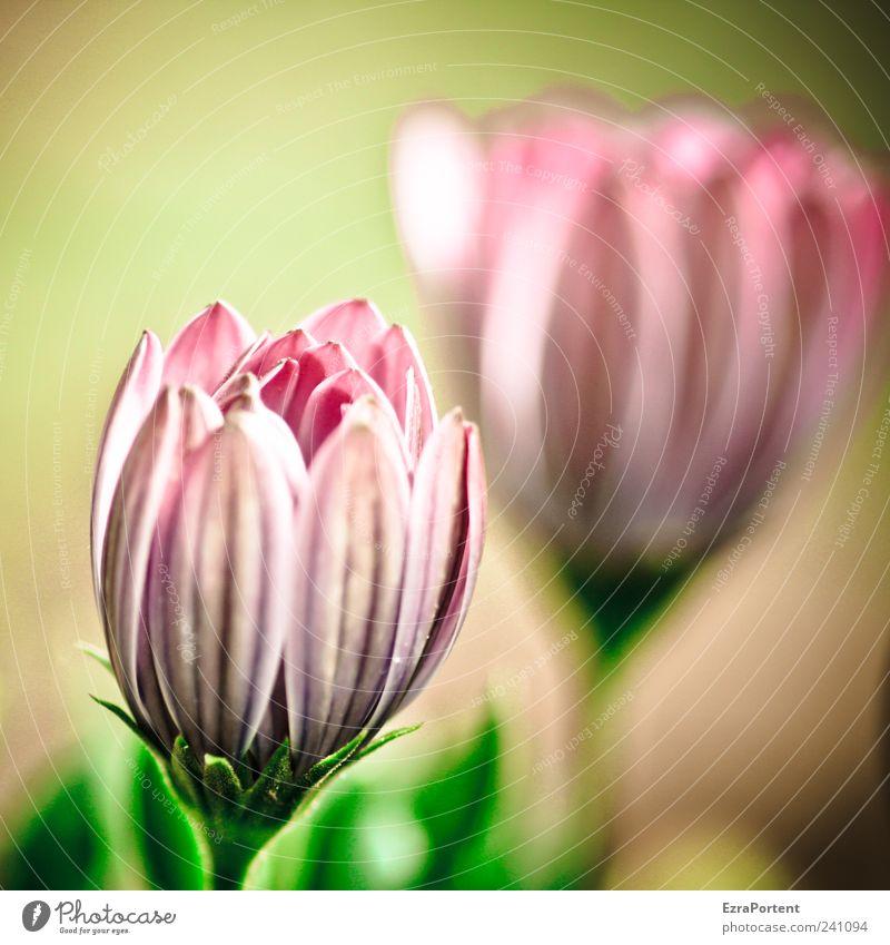 Nature Green Summer Plant Red Flower Landscape Calm Environment Spring Blossom Garden Pink Glittering Illuminate Esthetic