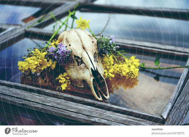 Animal skull with flowers over an old window Design Exotic Nature Plant Spring Climate change Flower Window Death's head Bone Wood Glass Crystal Old Poverty