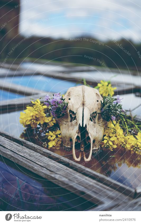 Animal skull with flowers over an old window Nature Beautiful Flower Window Religion and faith Environment Wood Style Art Death Design Fear Dirty Wild animal