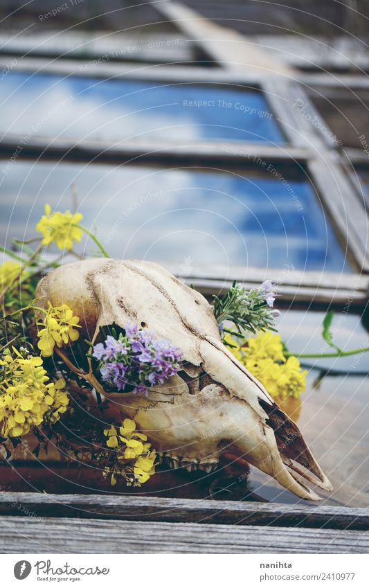 Animal skull filled with flowers over an old window Style Design Exotic Hallowe'en Nature Spring Climate change Flower Wild plant Window Wild animal Dead animal