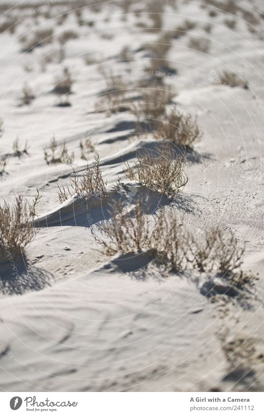 Spiekeroog l Brokeback Mountain Beach Ocean Environment Nature Landscape Plant Sand Summer Climate Beautiful weather Grass Hill Coast Desert To dry up Growth