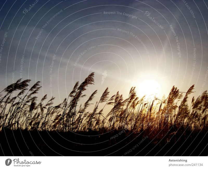 in the wind Environment Nature Landscape Plant Earth Air Sky Sun Weather Beautiful weather Warmth Grass Meadow Field Blue Brown Black Wind Colour photo