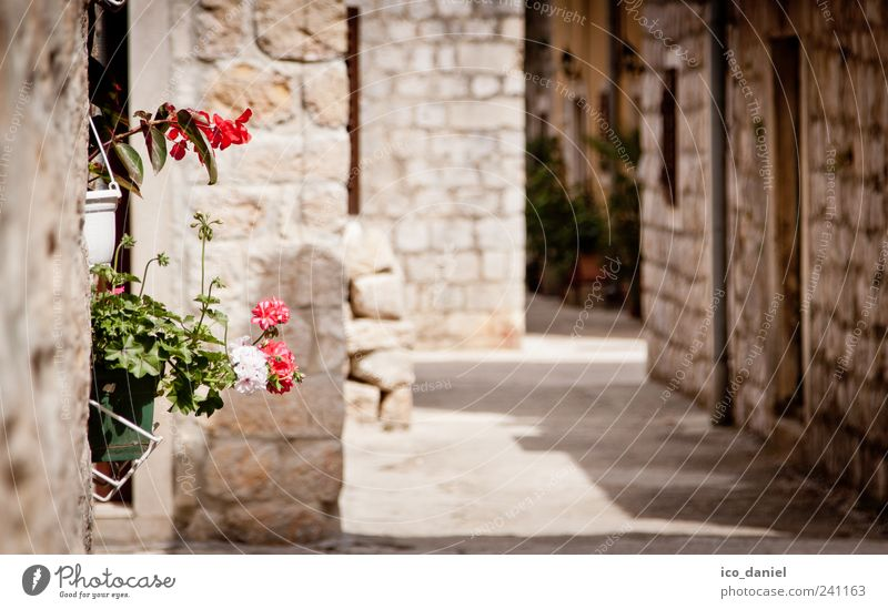Vacation & Travel Plant Summer House (Residential Structure) Wall (building) Architecture Lanes & trails Stone Wall (barrier) Blossom Building Pink Facade Trip
