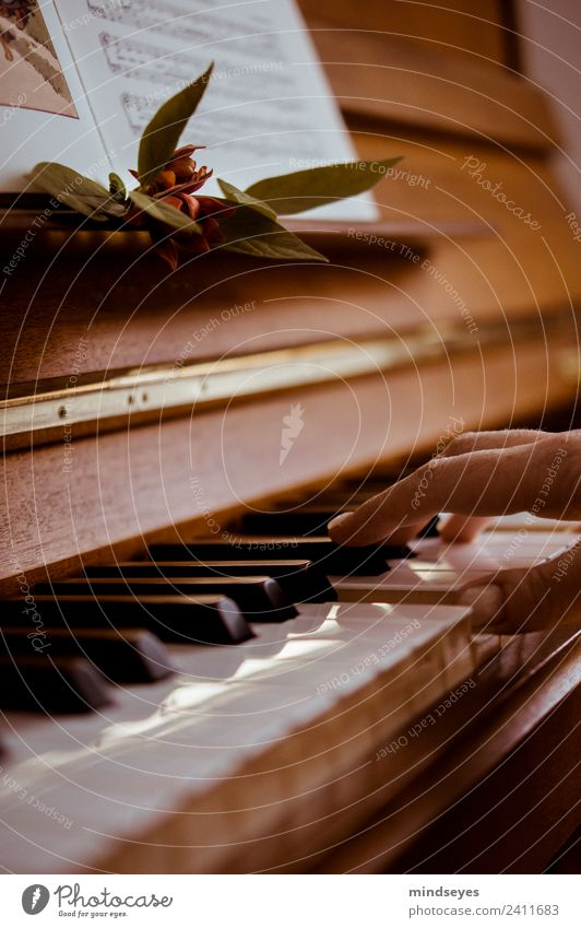 play the piano Hand Music Piano Playing Dream Esthetic Warmth Brown Gold Calm Make music Colour photo Interior shot Day Reflection Shallow depth of field