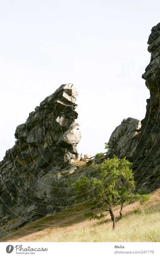 Nature Tree Meadow Mountain Stone Landscape Environment Rock Stand Natural Firm Exceptional Bizarre Cliff