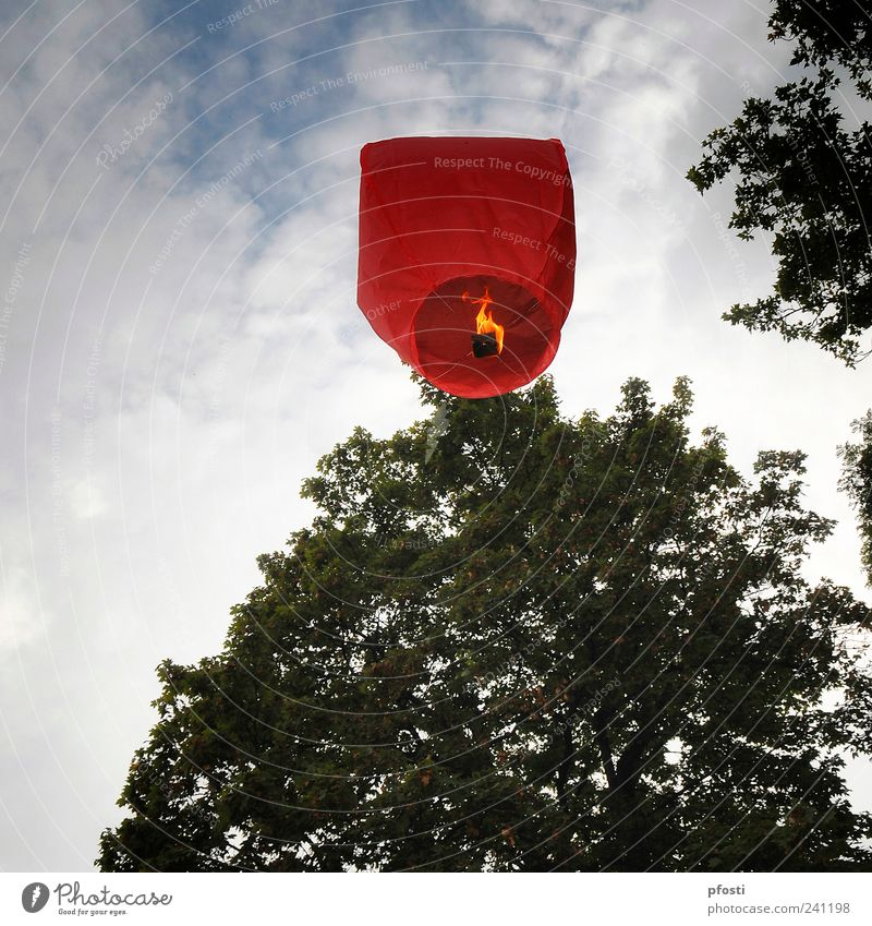 Where's the trip going? Joy Feasts & Celebrations Aviation Art Work of art Culture Event Sky Clouds Beautiful weather Tree Leaf Deserted Park Paper Balloon