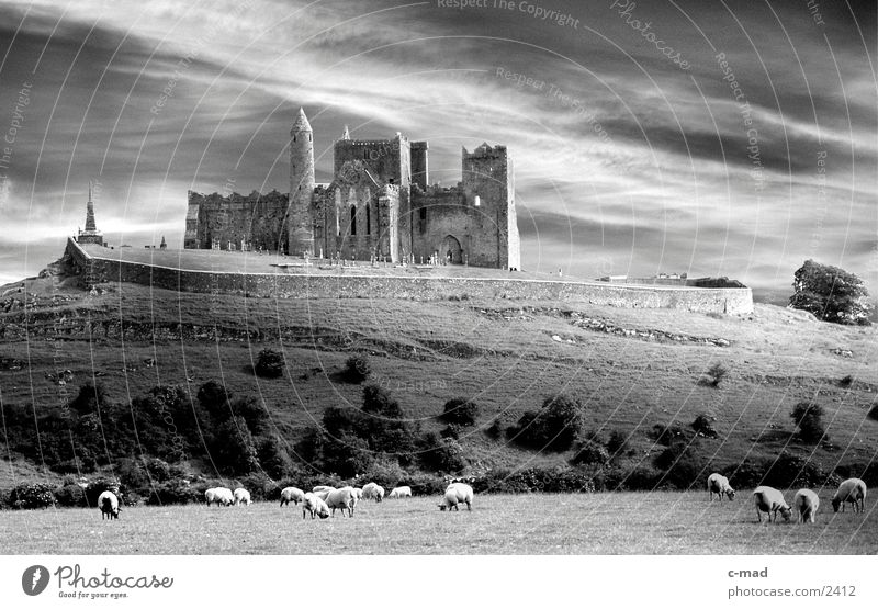 Rock of Cashell in Ireland Clouds Meadow Sheep Grass Moody Manmade structures Hill cashell rock of cashell Mow the lawn Black & white photo Castle Monastery