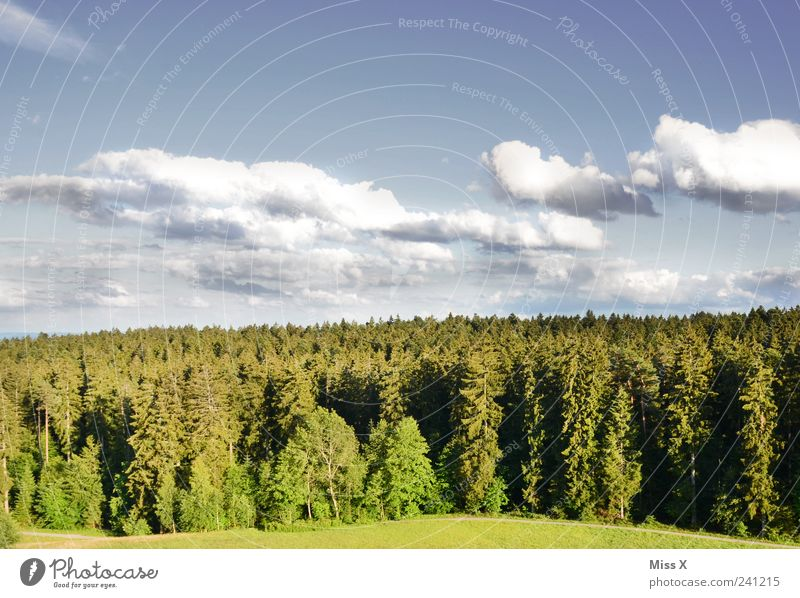 Sky Nature Green Tree Clouds Forest Environment Landscape Meadow Weather Climate Beautiful weather Fir tree Black Forest Germany