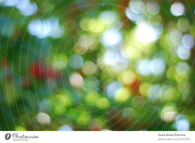 Nature Plant Environment Copy Space Beautiful weather Friendliness Point of light Blur Multicoloured