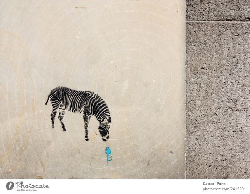 Blue Flower Animal Loneliness Graffiti Wall (building) Stone Wall (barrier) Wild animal Wild Sweet Uniqueness Appetite Discover Division To feed