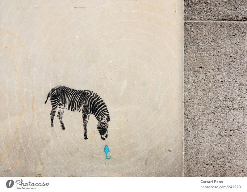 yummy Flower Wall (barrier) Wall (building) Wild animal Zebra 1 Animal Stone Select Discover To feed Feeding Uniqueness Sweet Blue Graffiti Zebra crossing