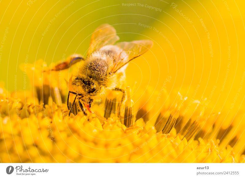 Nature Summer Plant Beautiful Sun Flower Animal Joy Warmth Yellow Environment Autumn Spring Blossom Meadow Happy
