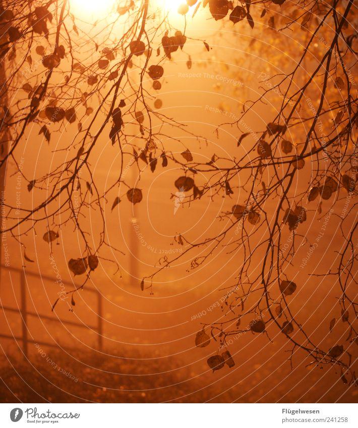 Carmen Nebula Far-off places Night sky Bad weather Storm Wind Gale Fog Tree Deserted Street Crossroads Lanes & trails Road junction Fantastic Emotions Leaf