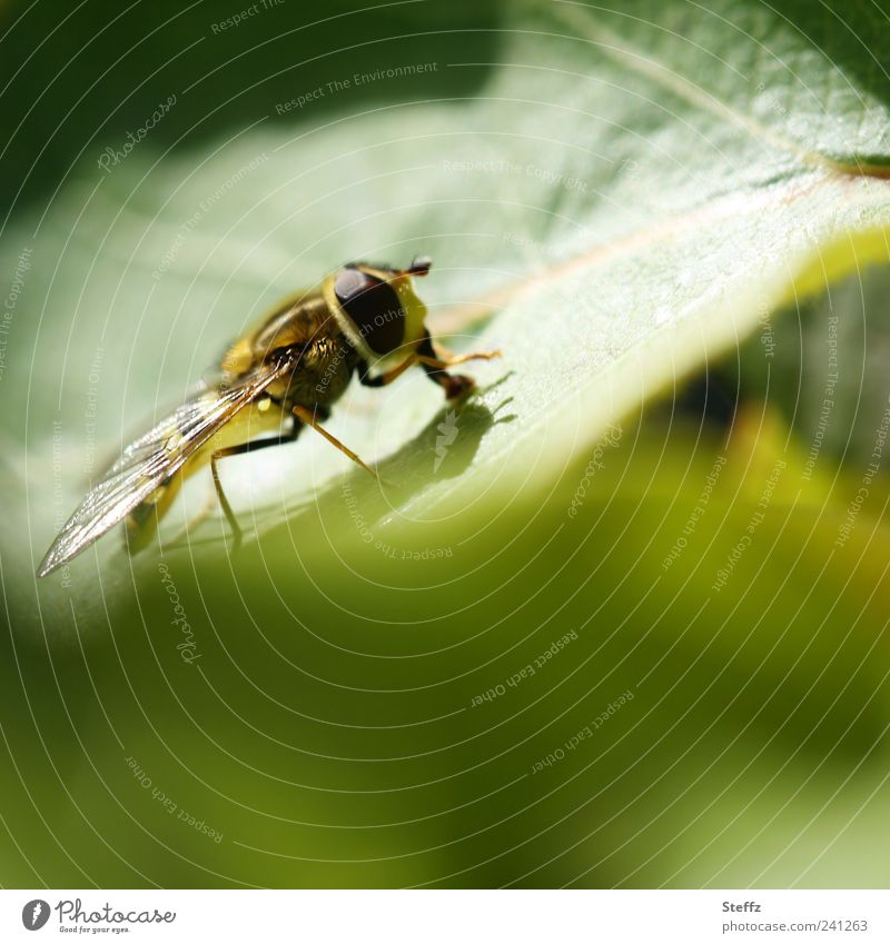 small green world Nature Sunlight Summer Plant Leaf Fly Wing Hover fly Insect Compound eye To feed Small Near Natural Summer feeling Mood lighting Life