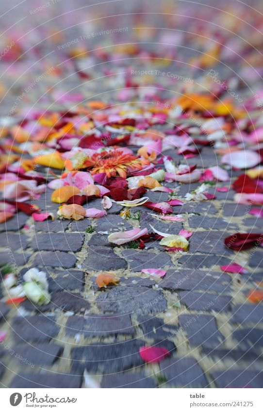 Flower Joy Leaf Street Emotions Gray Happy Stone Blossom Feasts & Celebrations Lie Hope Rose Sidewalk Passion Attachment