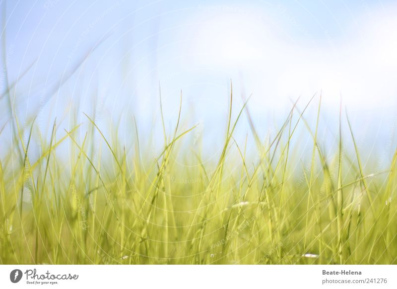 Soft awakening Nature Air Sky Clouds Sunlight Summer Beautiful weather Grass Foliage plant Meadow Breathe Observe Touch To enjoy Growth Wait Esthetic