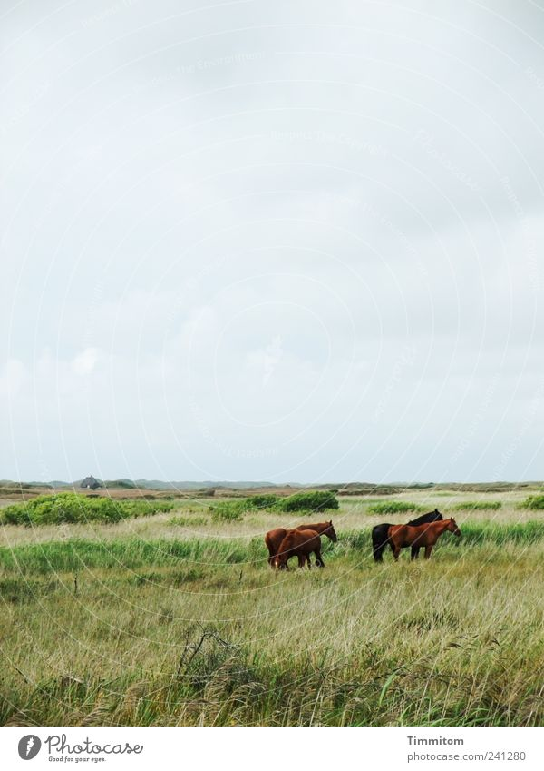 Friends II Vacation & Travel Environment Nature Landscape Plant Animal Clouds Meadow North Sea Nymindegab Denmark Deserted Horse 4 Group of animals Free Large