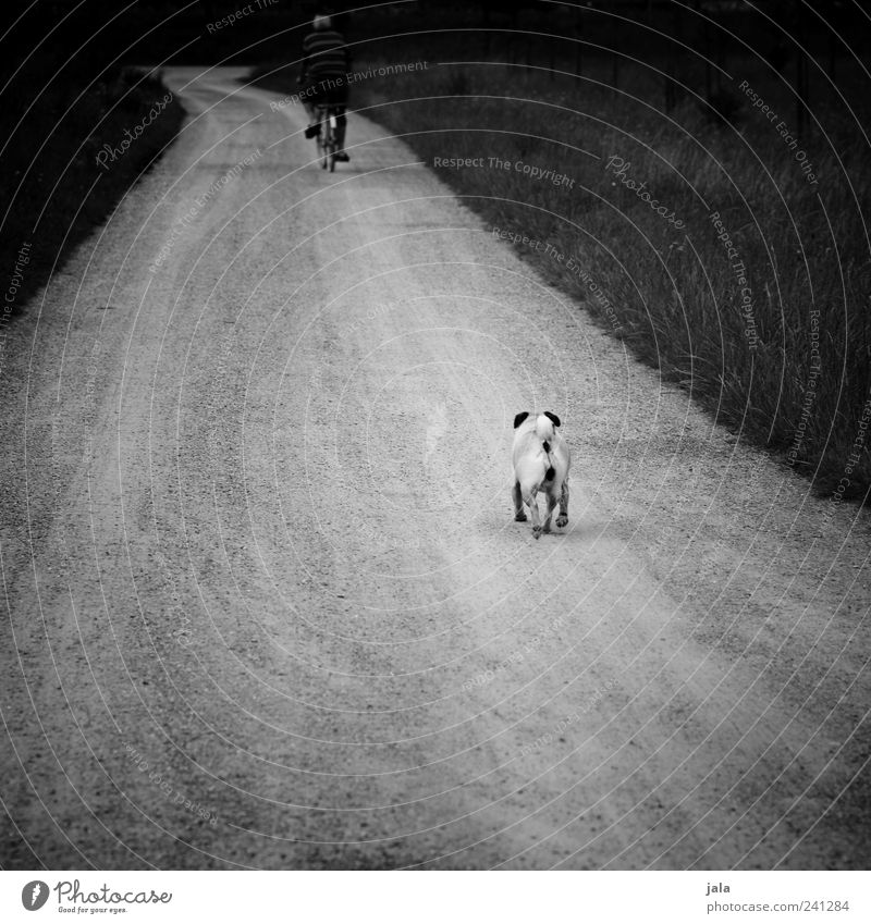 wait, human! Human being Masculine Man Adults 1 Landscape Plant Grass Lanes & trails Animal Pet Dog Driving Walking Pug Bicycle Black & white photo
