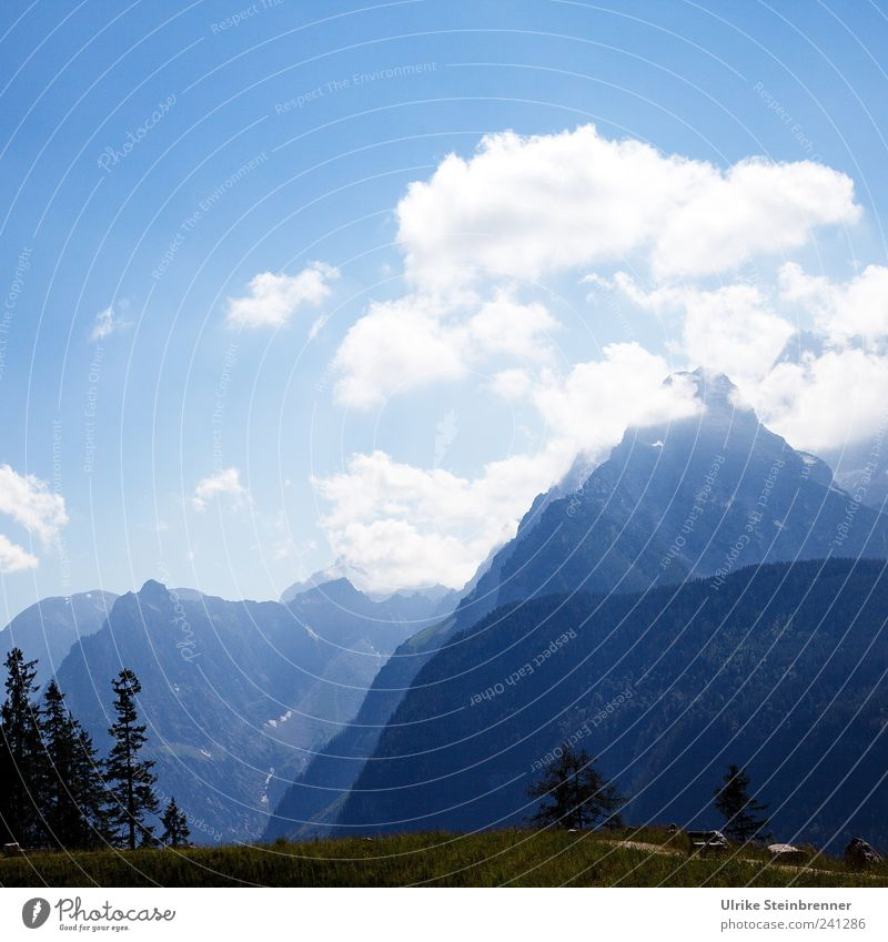 Nature Sky Tree Summer Clouds Mountain Grass Landscape Air Large Tall Travel photography Alps Point Peak Vantage point