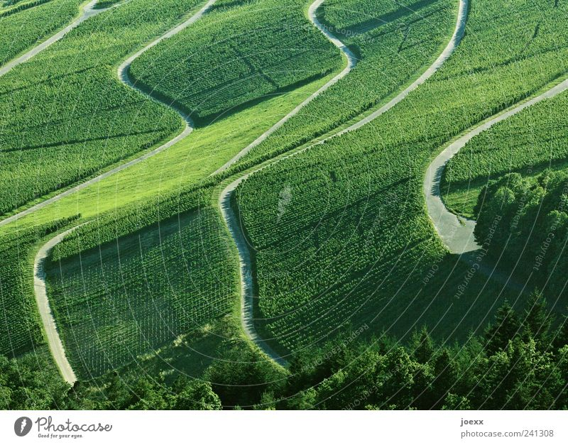 Green Summer Calm Mountain Gray Lanes & trails Landscape Vine Beautiful weather Vineyard Agricultural crop Wine growing
