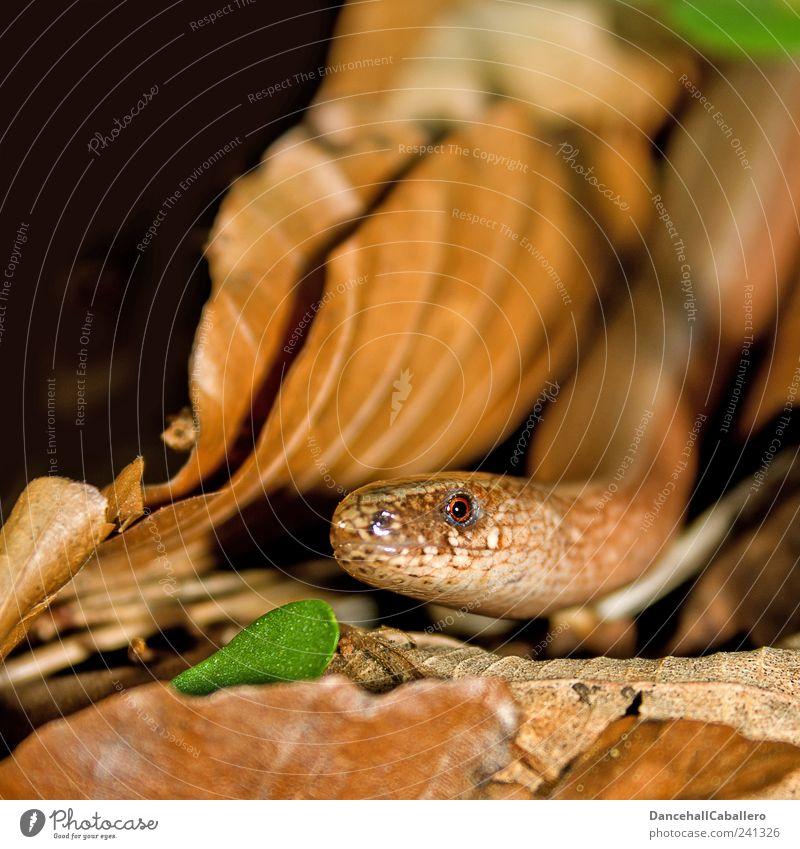 Nature Green Animal Black Environment Eyes Garden Head Brown Moody Earth Threat Observe Curiosity Mysterious Mystic