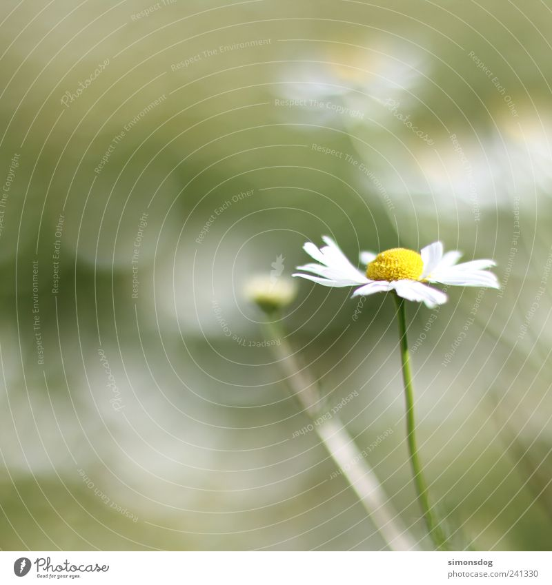 \flower in the wind/ Nature Summer Plant Grass Blossom Meadow Blossoming Illuminate Fragrance Thin Large Bright Strong Yellow Green Contentment Movement Elegant