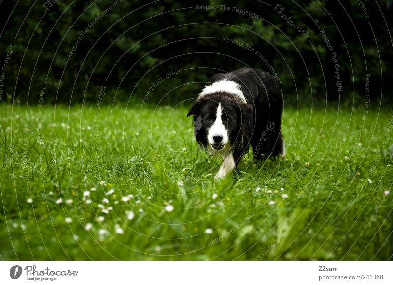 Dog Nature Green Animal Environment Landscape Dark Meadow Grass Going Natural Elegant Lifestyle Observe Idyll Curiosity