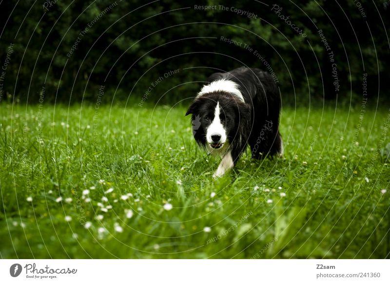 Dog Nature Green Animal Environment Landscape Dark Meadow Grass Going Natural Elegant Lifestyle Observe Idyll Curiosity