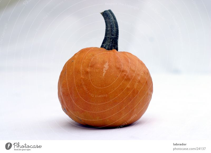 pumpkin Round Nutrition Pumpkin Helloween Orange Free Hallowe'en