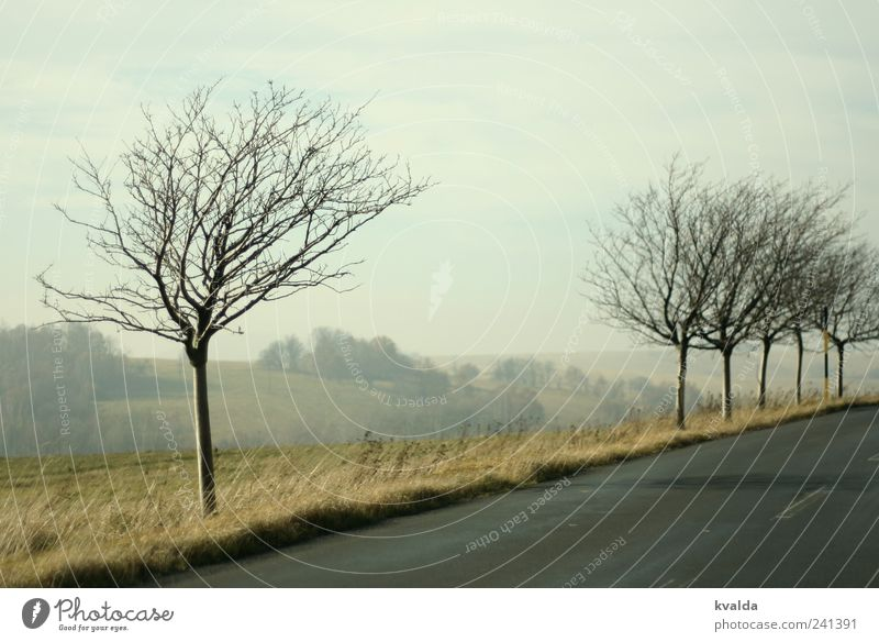 Sky Nature Tree Plant Loneliness Calm Relaxation Far-off places Landscape Street Meadow Autumn Gray Idyll Hill Longing