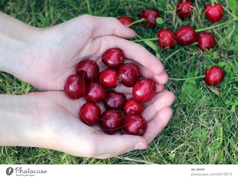 Human being Nature Summer Healthy Eating Green Hand Red Life Environment Grass Food Garden Fruit Nutrition