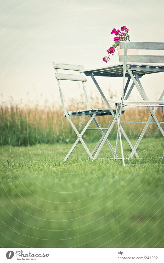 Sky Flower Green Summer Calm Loneliness Meadow Grass Garden Landscape Pink Free Table Retro Chair Idyll