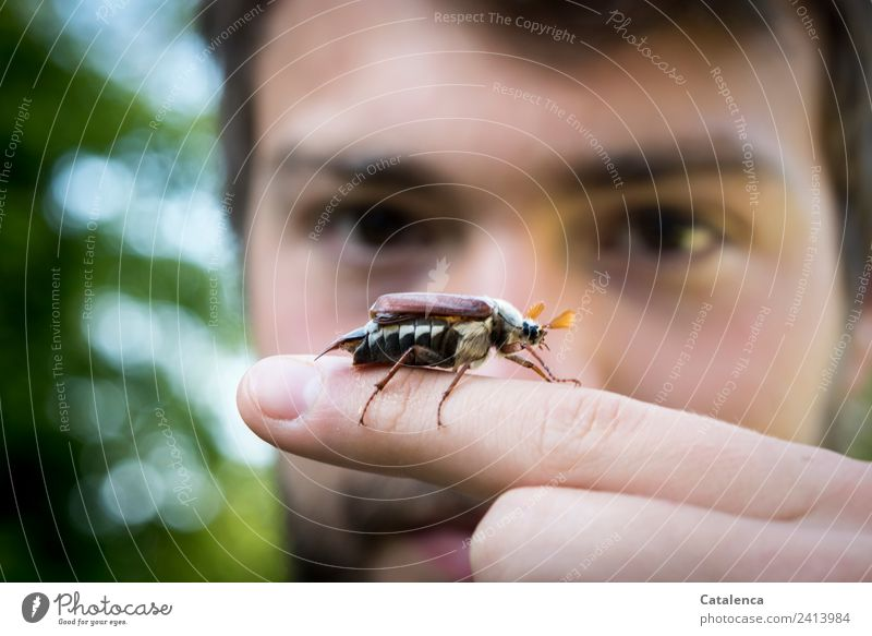 May bug season Masculine Young man Youth (Young adults) 1 Human being Nature Spring Tree Bushes Garden Beetle Animal Observe Crawl Authentic Beautiful Blue