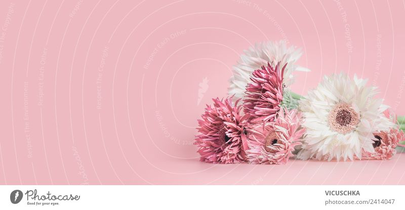 Pink flowers on pink background Style Summer Feasts & Celebrations Nature Plant Flower Decoration Bouquet Flag Design Background picture Aster Gerbera Sale