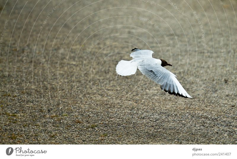 Calm Animal Bird Elegant Flying Earth Wing Seagull