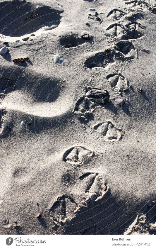 Traces in the sand Vacation & Travel Summer Beach Ocean Nature Sand Sunrise Sunset Beautiful weather Baltic Sea Bird Seagull Animal tracks Movement Going