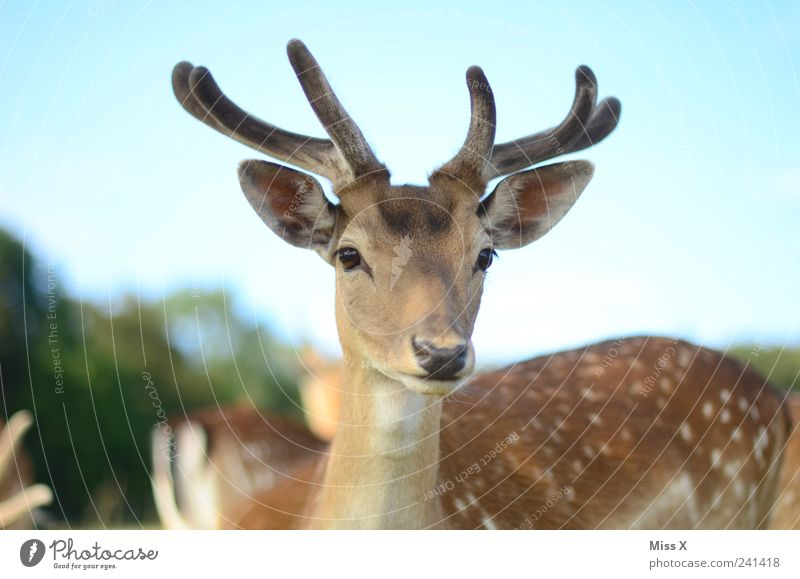 Sky Nature Animal Wild animal Curiosity Antlers Deer Even-toed ungulate