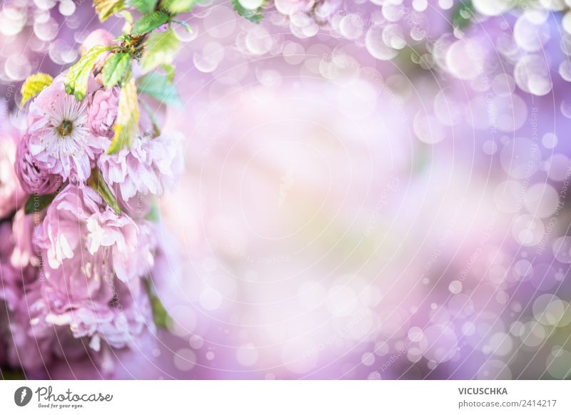 Purple Blossoms Background Design Summer Nature Plant Spring Flower Decoration Bouquet Hip & trendy Violet Pink Background picture Blur Almond blossom