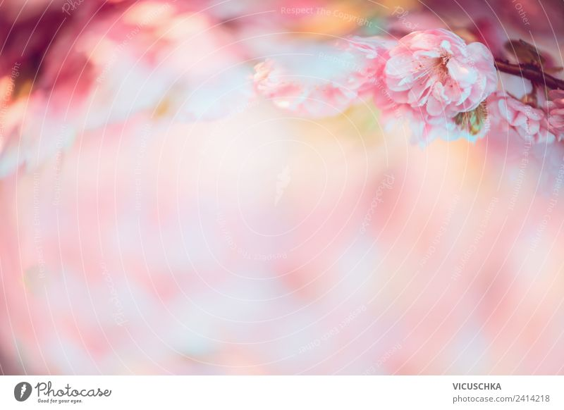 Nature Background with pink flowers Style Design Summer Plant Beautiful weather Flower Blossom Pink Background picture Blur Colour photo Exterior shot