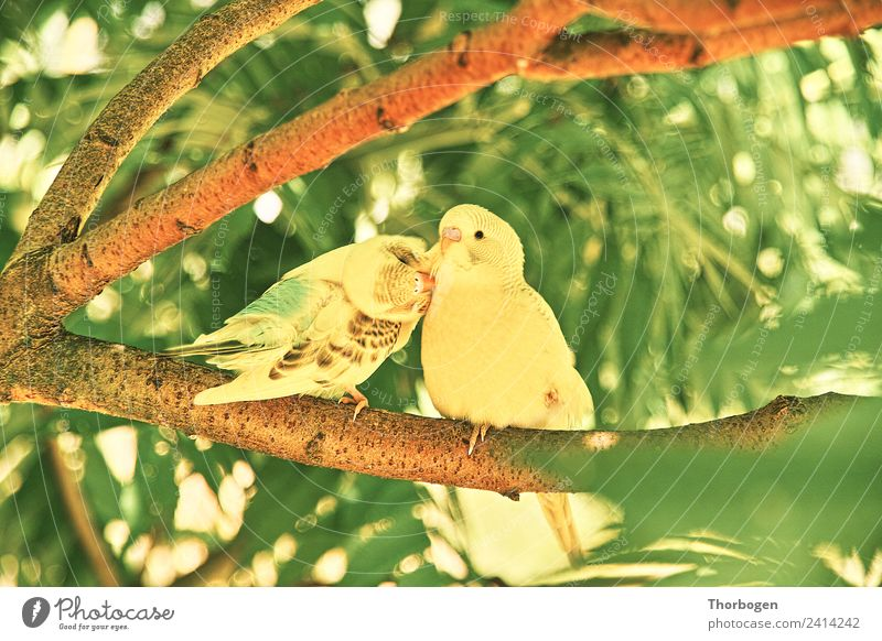 budgies Bird 2 Animal Communicate Cleaning Yellow Green Colour photo Exterior shot Day Shallow depth of field
