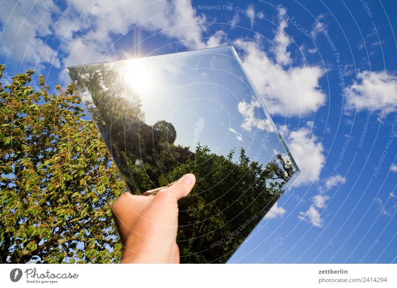 Another mirror in the sky Branch Tree Relaxation Garden Sky Heaven Nature Plant Garden plot Summer Copy Space Depth of field Mirror Mirror image Clouds Sun