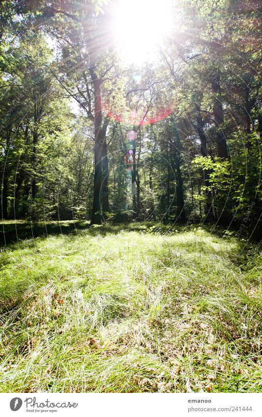 Sun in the Graswald Vacation & Travel Trip Freedom Summer Hiking Environment Nature Landscape Plant Climate Weather Tree Grass Forest Growth Exotic Tall