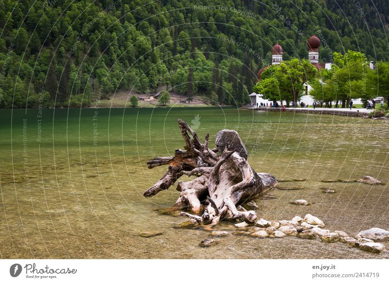 uprooted Vacation & Travel Tourism Trip Summer vacation Mountain Nature Landscape Root Forest Alps Lakeside Lake Königssee St. Bartholomä Berchtesgaden Bavaria