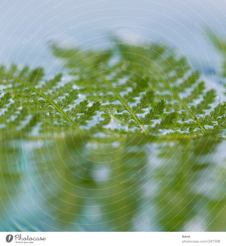 Nature Blue Water Green Beautiful Plant Summer Leaf Life Line Waves Swimming & Bathing Wet Fresh Esthetic Growth